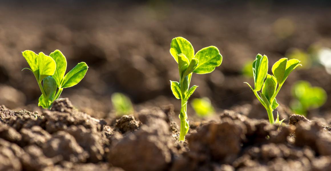 Bạn có biết nguyên tắc 6 không trong việc sản xuất rau hữu cơ?