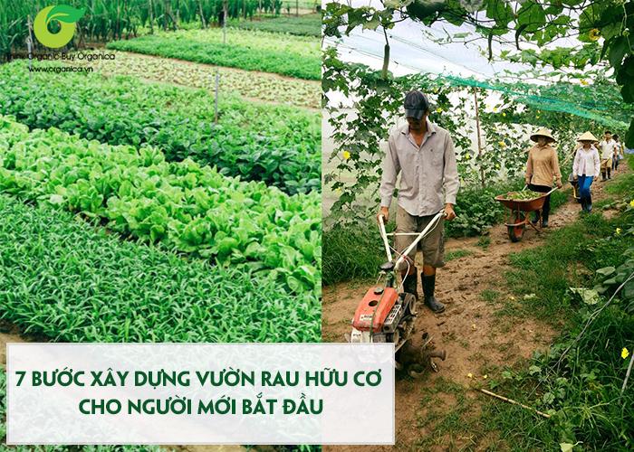 Rau hữu cơ là gì ? 7 bước xây dựng vườn rau hữu cơ hiệu quả