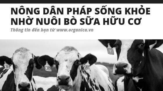 Nông dân Pháp sống khỏe nhờ nuôi bò sữa hữu cơ