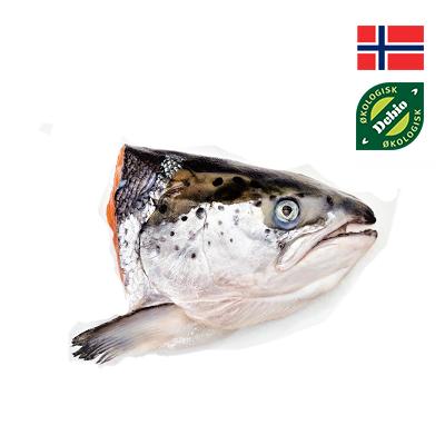 Đầu cá hồi hữu cơ Mùa