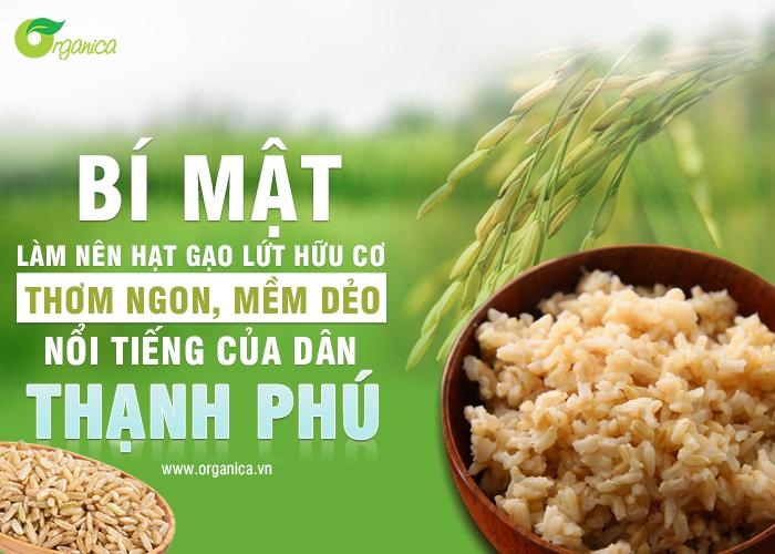 Bí mật làm nên hạt gạo lứt hữu cơ thơm ngon, mềm dẻo nổi tiếng của dân Thạnh Phú