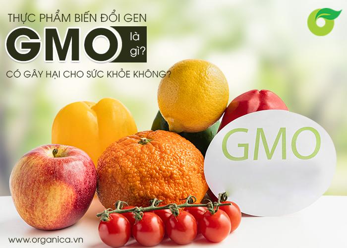 Thực phẩm biến đổi gen GMO là gì? Có gây hại cho sức khỏe không?