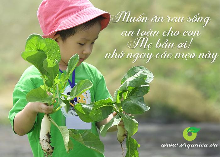 Muốn ăn rau sống an toàn cho con, mẹ bầu ơi nhớ ngay các mẹo này