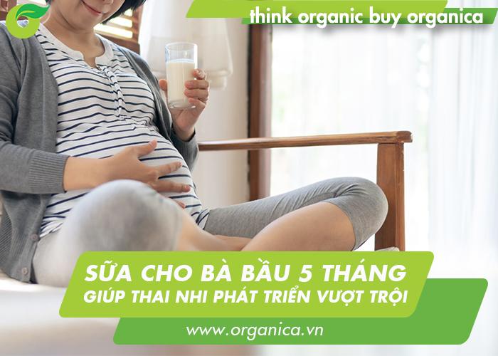 Sữa cho bà bầu 5 tháng giúp thai nhi phát triển vượt trội