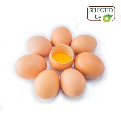 Trứng gà - Ba Vì