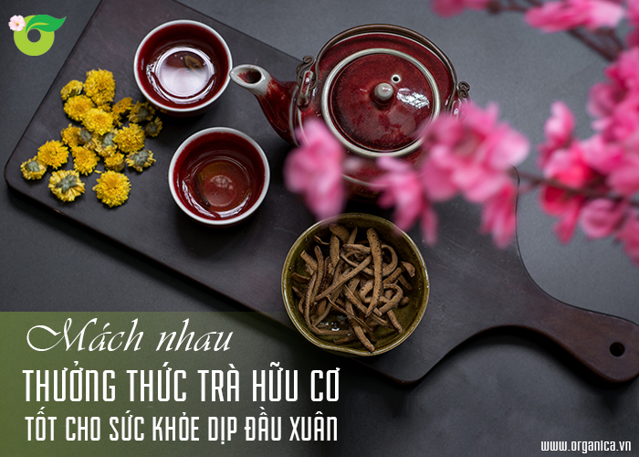 Mách nhau thưởng thức trà hữu cơ tốt cho sức khỏe dịp đầu Xuân