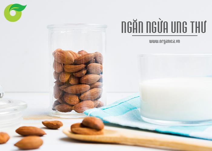Các loại sữa hạt hầu hết có nhiều axit anacardic, một hợp chất có đặc tính chống ung thư