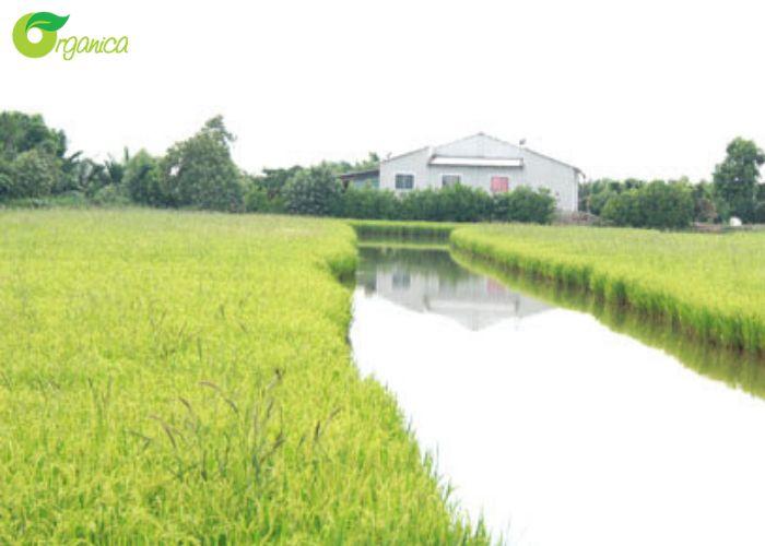 [Ngày lương thực thế giới] Xu hướng xây dựng nền nông nghiệp 4.0 tại Việt Nam